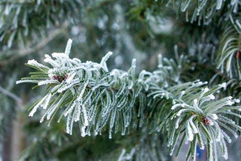 winter-656120_960_720(1)